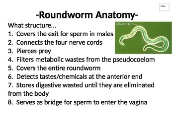 Journal (or do-now) packet for Phylum Nematoda (Roundworms)
