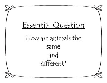 Journey's Unit 3, Lesson 15 Focus Wall - Animal Groups