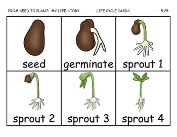 Journeys 2014/2017 Second Grade Unit 5 Lesson 25: From Seed To Plant