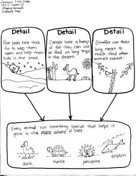 Journeys First Grade: Amazing Animals/Unit 5-Lesson 22/Graphic Organizers