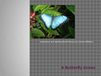 Journey's-First Grade-Lesson 24-A Butterfly Grows-Voc & Sp ppt.