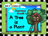Journeys Grade 1 A Tree is a Plant Unit 5 Lesson 24