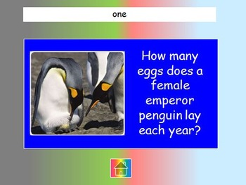 "Journeys 2nd Lesson 21 Jeopardy Review for ""Peguin Chick"""