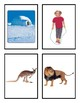Journeys Sound Spelling Picture Cards