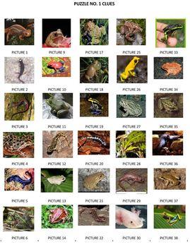Jumbled Amphibian Names
