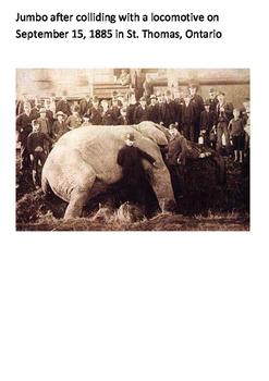 Jumbo the Elephant Word Search