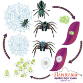 Jumping Spider Life Cycle Clip Art Set