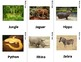 Jungle Desert Forest Sign Language (ASL) Flash Cards with descriptions