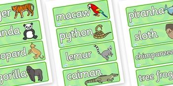 Jungle & Rainforest Word Cards