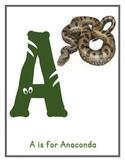 Jungle Themed Alphabet