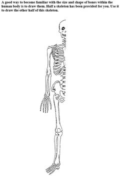 Body Systems Part A - The Skeletal System