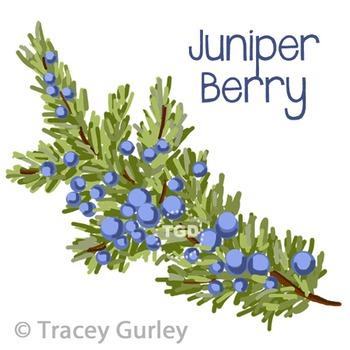 Juniper Berry Branch - juniper berry clip art Printable Tracey Gurley Designs
