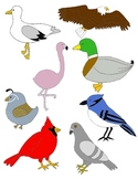 Just Birds Clip Art: 36 PNGs