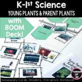 Kindergarten Science Unit Lesson Young Plants Parent Plants