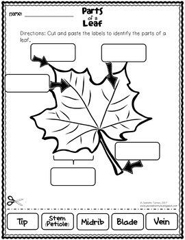 Fall Science Bundle: Leaf, Apple, Pumpkin and Bee Science