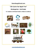 K - 2 Life Cycle of Apple Tree - Mental Health or Medical Conditions - Science