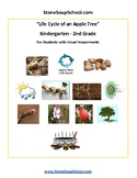 K - 2 Life Cycle of Apple Tree - Visual Impairments - Science