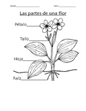K-2 Parts of a Flower and Plant Needs Worksheet (Spanish)