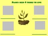 K-2 Plants Mimio