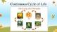 K-4 Life cycle of a pumpkin