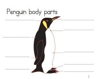 K Common core writing unit informative_Penguins
