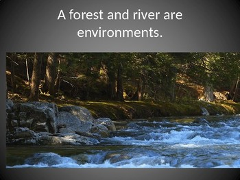 K ESS2-2 Plants and Animals Change the Environment PowerPoint