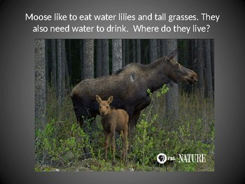 K ESS3-1 Needs of Animals and Where They Live: PowerPoint