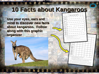 KANGAROOS - visually engaging PPT w facts, video links, handouts & more