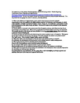 KEY Transcription Factor Cascades and Segmentation Article
