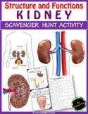 KIDNEY Scavenger Hunt - An Activity