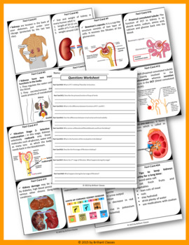 KIDNEY Scavenger Hunt - An Activity