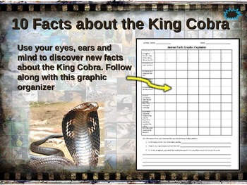 KING COBRA: 10 facts. Fun, engaging PPT (w links & free graphic organizer)