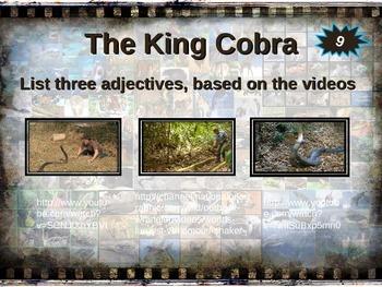 KING COBRA: 10 facts. Fun, engaging PPT (w links & free graphic organizer)