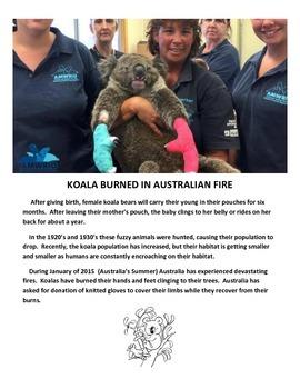 KOALA BEARS (GRADES 3 - 5)