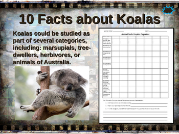 KOALAS - visually engaging PPT w facts, video links, handouts & more