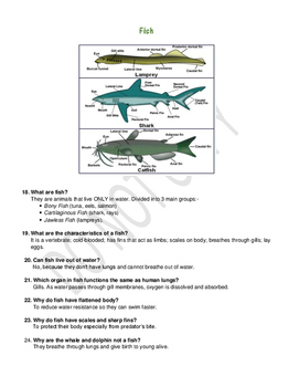 KS2 Science Revision Notes (Year 3)