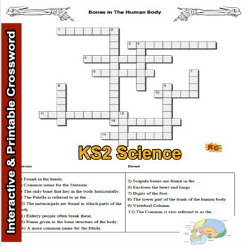 Interactive KS2 The Human Skeleton Resources Bundle (5 products)