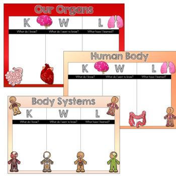 Kwl Chart Human Body Organs Systems By La Vonk Creations Tpt