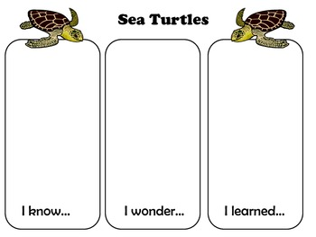 KWL:  Sea Turtles