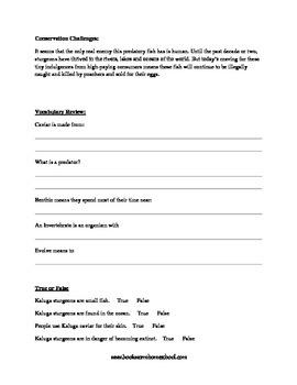 Kaluga Sturgeon Informational Text Activity