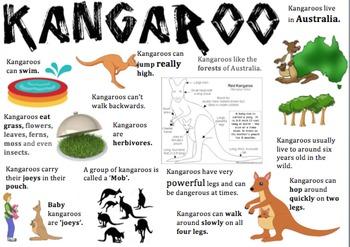Kangaroo Information Report Visual