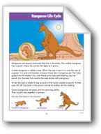 Kangaroo Life Cycle