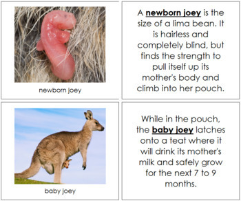 Kangaroo Life Cycle Nomenclature Book