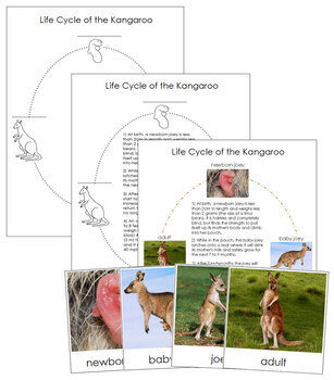Kangaroo Life Cycle Nomenclature Cards and Charts