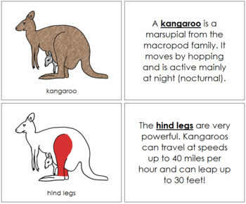 Kangaroo Nomenclature Book (Red)