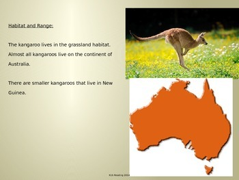 Kangaroo - Power Point - Information Pictures Facts