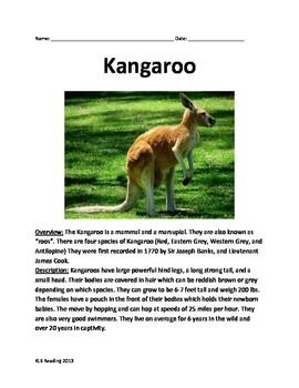 Kangaroo - Review Informational Article Questions Vocabulary Facts