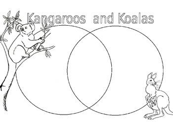 kangaroo and koala venn diagram template by miss emily tpt