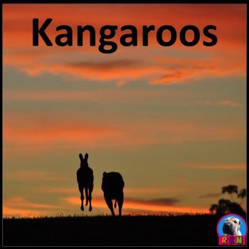 Kangaroos - PowerPoint & Activities