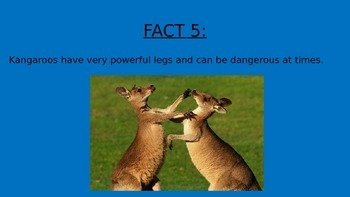 Kangaroos Information PowerPoint